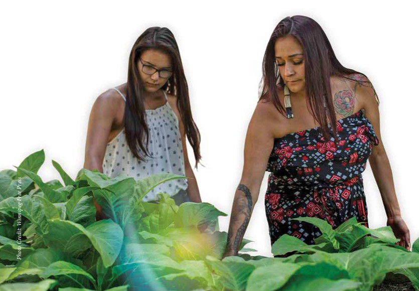 Marymound Growing Thriving Medicinal Gardens and Healthier Children